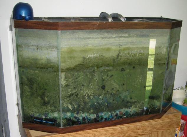 dirty-fish-tank-crop